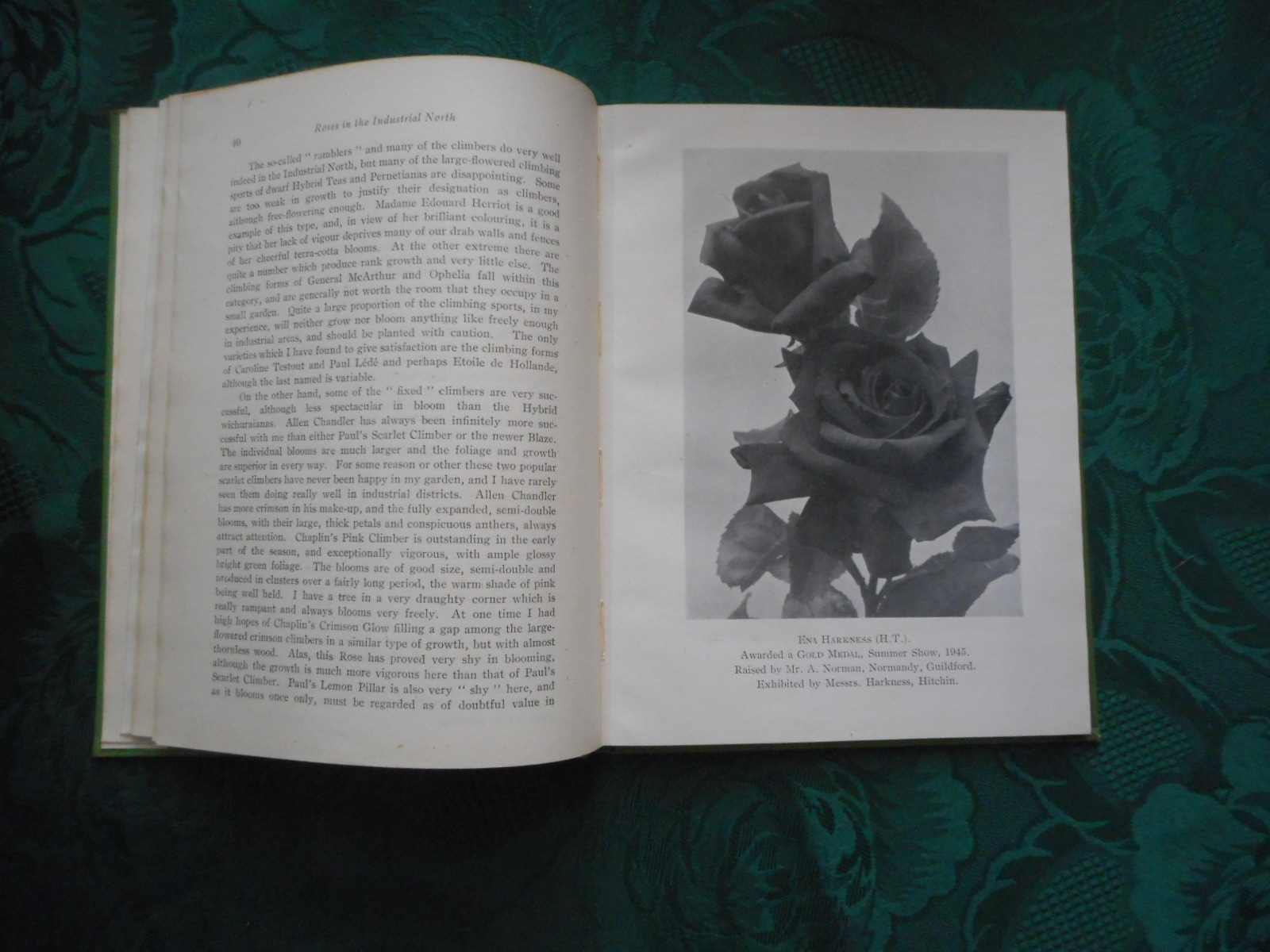 Image for THE ROSE ANNUAL for 1946 of the NATIONAL ROSE SOCIETY